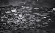 Waar de waterlelies