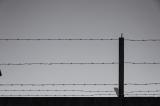 Koepelgevangenis (Breda)