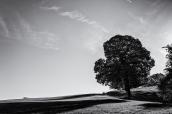 Verloren Landschap
