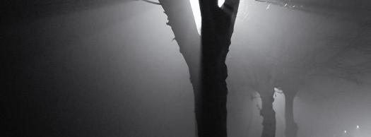 stralen in de mist