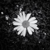 de lente schreeuwt mij toe